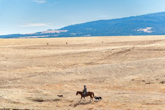 Cowboy rides horse over Montana prairie