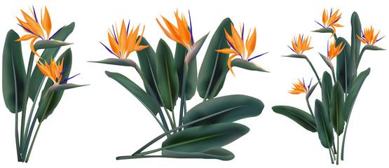 Strelitzia Reginae tropical flower bouquets set