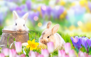 bunny and easter eggs card background