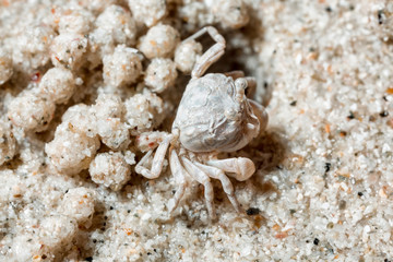 A tiny crab in the sand by the sea.
