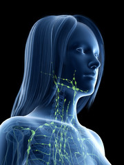 3d rendered medically accurate illustration of a females lymph nodes of the neck