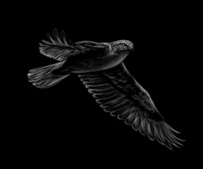 Fototapete - Portrait of a flying falcon on a black background.