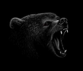 Fototapete - Portrait of a brown bear head on a black background. Grin of a bear