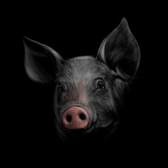 Portrait of a pig head on a black background. Chinese Zodiac Sign Year of Pig