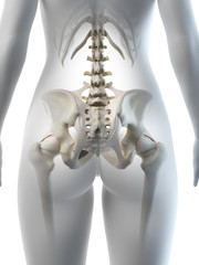 3d rendered medically accurate illustration of a females hip bone