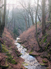 a stream flowing though a steep valley with mist covered winter trees and mossy rocks