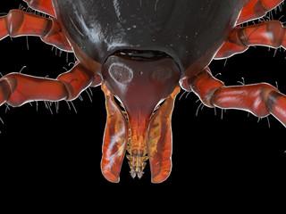 3d rendered illustration of a tick