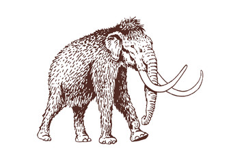 Graphical vintage mammoth ,vector illustration