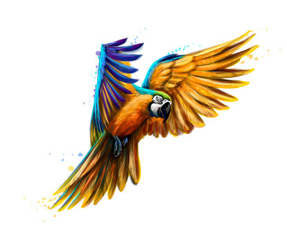 Portrait blue-and-yellow macaw in flight from a splash of watercolor. Ara parrot, Tropical parrot