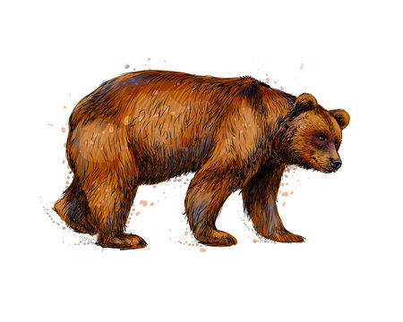 Portrait of a brown bear from a splash of watercolor