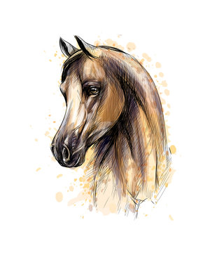 Horse head portrait from splash of watercolors. Hand drawn sketch