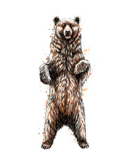 Fototapete - Brown bear standing on his hind legs from a splash of watercolor