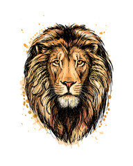 Portrait of a lion head from a splash of watercolor
