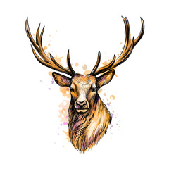 Portrait of a deer head from a splash of watercolor