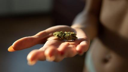 marijuana buds in woman hands close-up.