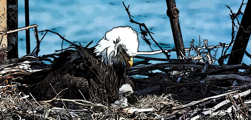 Bald Eagle mother stares down at eaglet drawing