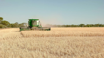 a combine harvester being used on a farm to harvest ripe barley approaches the camera
