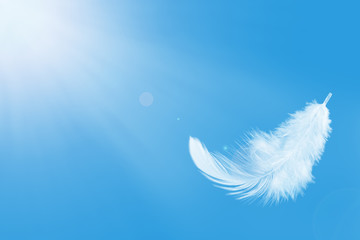 Single white feather float in the air. Fotomurales