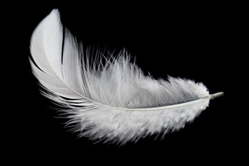 Single white feather isolated on black background Wall mural