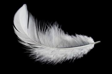 Single white feather isolated on black background Fotoväggar