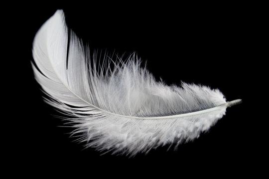 Single white feather isolated on black background