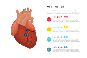 human heart infographics template with 4 points of free space text description - vector illustration