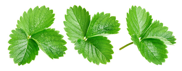 Strawberry leaves Clipping Path Wall mural