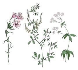 Set of meadow herbs in vector