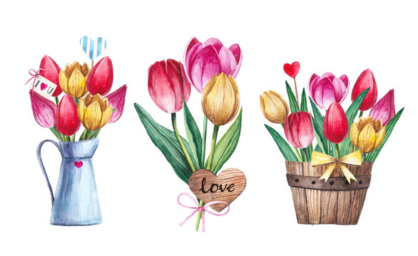 Watercolor bouquet of tulips isolated on white background