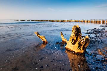 Baumstumpf und alte Buhne am Strand der Ostsee, Abendlicht, Darß, Deutschland