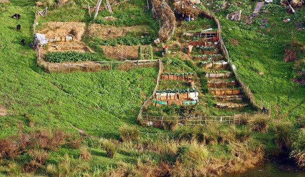 Huerta tradicional portuguesa a orillas del río Guadiana, Mértola, Beja, Portugal.