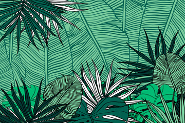 Tropical background. Texture with banana leaves, palm and  monstera.