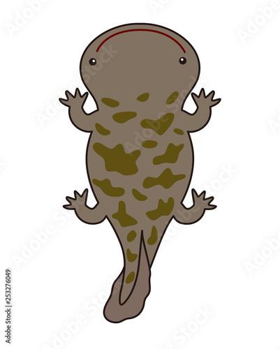 オオサンショウウオ Giant Salamanderfotoliacom の ストック写真と
