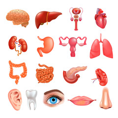Vector internal organs icon set. Realistic vector illustration.