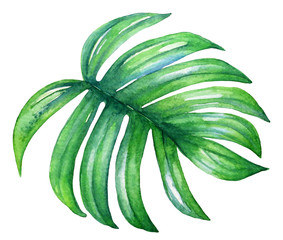Watercolor illustration of a tropical plam leaf.