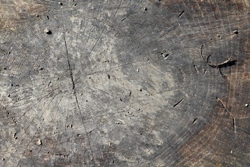 A close view of the old dirty wood tree trunk texture.