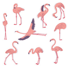 Hand drawn vector set of pink flamingo in different poses. Exotic bird with long legs and neck. Wildlife theme