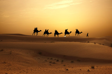 Sunset in desert with camel caravan silhouette on sand dunes