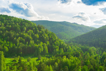 Summer landscape magnificent green hills and forest with different trees against the blue sky. Russia Siberia.