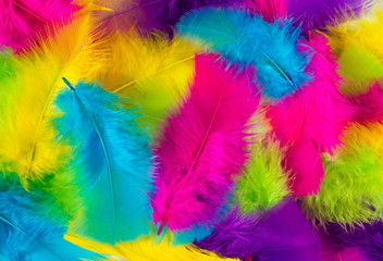 Colorful feather texture. Fluffy background. Top view