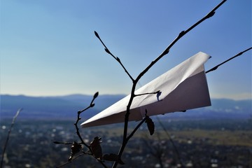 paper plane in the branches