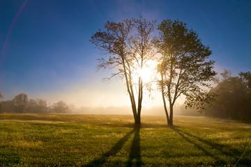 Sunrise Through Two Tree