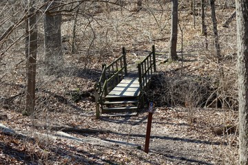 The wooden bridge on the trail in the forest on a sunny day.