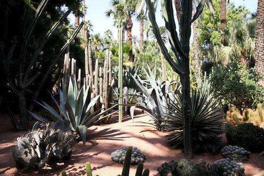 dans le jardin de Majorelle à Marrakech au Maroc