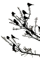 silhouette of birds sitting in a tree