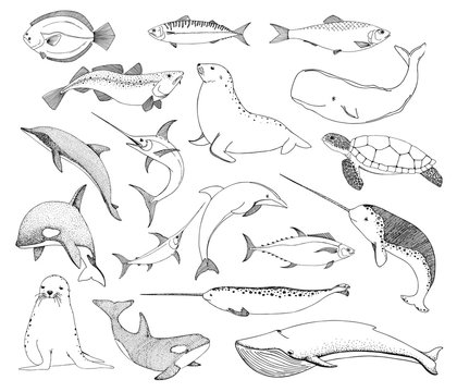 Sketch various sea creatures. Turtle whale walrus dolphin and others. Vector