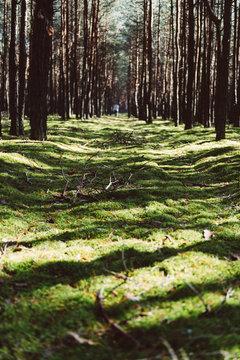 Mech w lesie