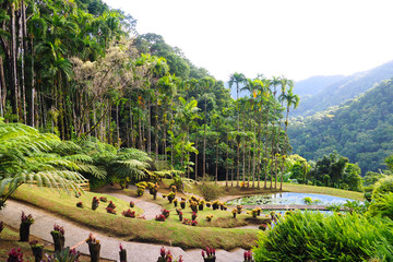 view of the beautiful garden of Balata in Martinique - FWI