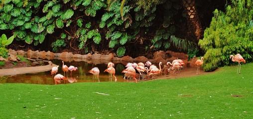 Ptaki, flamingi, natura