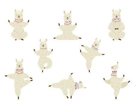 Collection cartoon funny cute llama alpaca practicing yoga position.